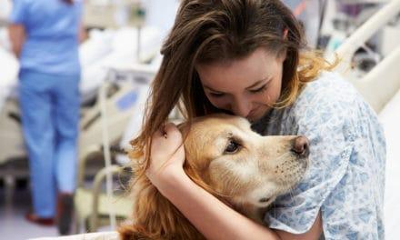 Animal therapies have genuine pedigree – study